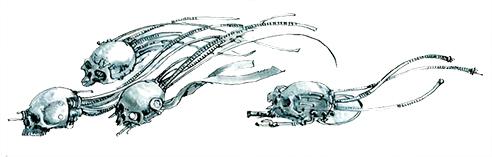 ia-skull-5